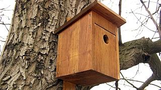 Jak vyrobit budku pro ptáčky na míru: Kvalita se vyplatí!