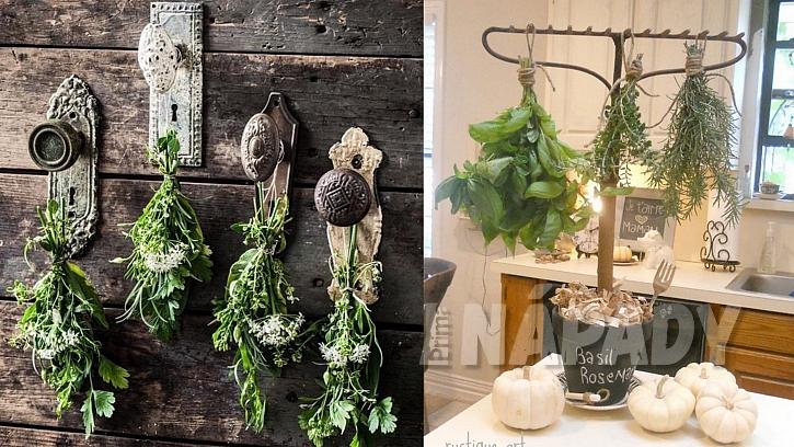 Sběr a sušení léčivých bylinek: hravé sušení bylinek
