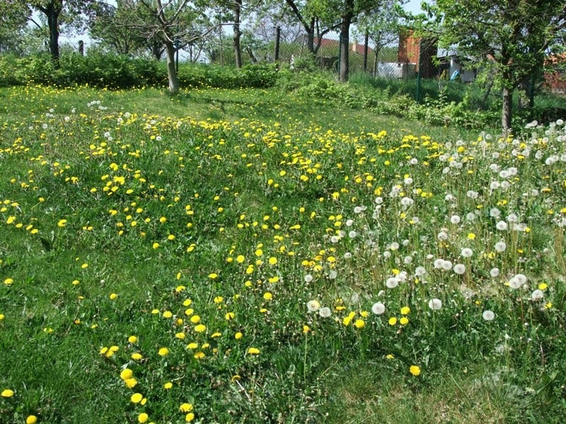 Skandinávská kvalita na české zahradě - to je zahradní technika STIGA