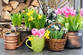 K jaru patří cibuloviny, vykvetou na svátečním stole