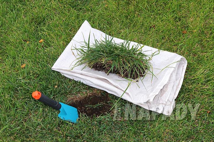 Vložení drnu do díry v trávníku