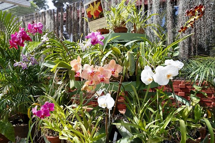 K pěstování orchideí využijete rašeliník i mechy
