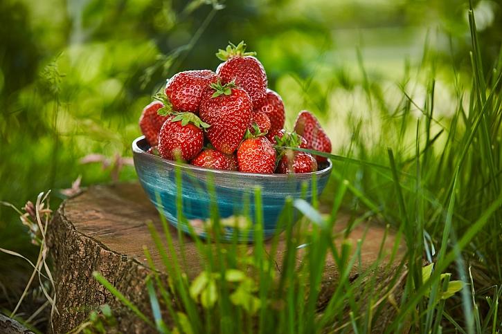 Zakládáme záhon pro jahody (Zdroj: Depositphotos)