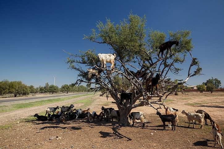 Kozy na stromě