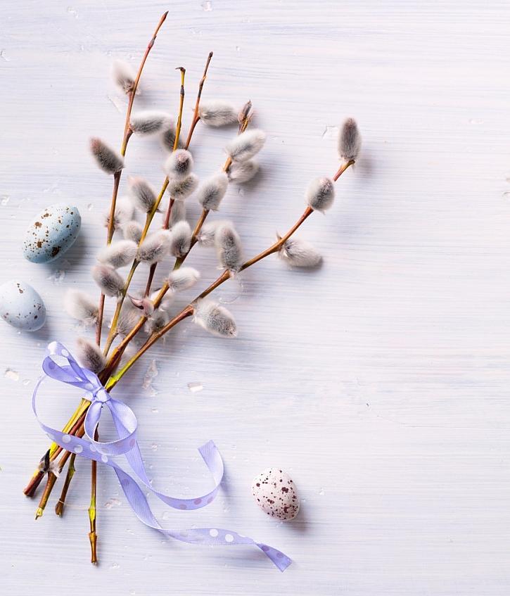 Poslední postní nedělí je neděle květná, v tento den se v kostelích světí kočičky