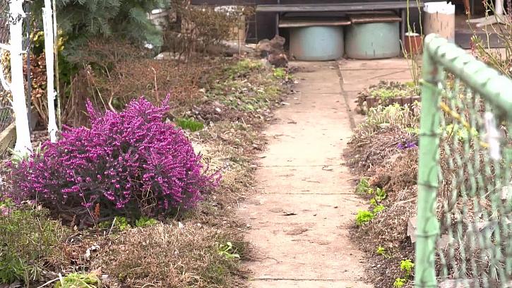 Víte, proč bychom měli kultivovat okolí naší zahrady za plotem?