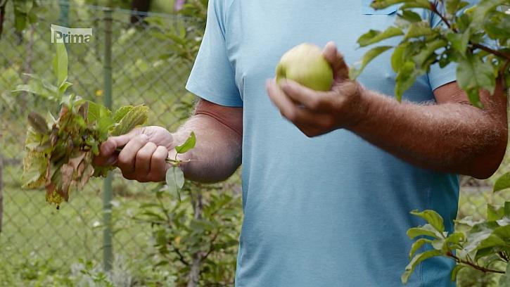 Podzimní výživa ovocných stromů pomocí správného hnojiva (Zdroj: Podzimní výživa ovocných stromů)
