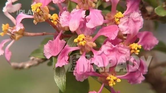 Pokojové rostliny kvetoucí v zimě