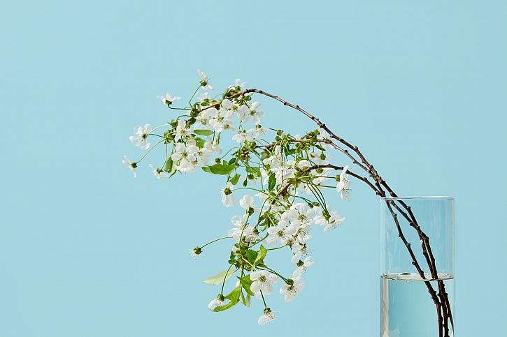 Třešňová větvička