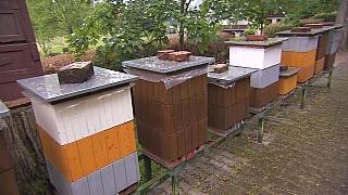 Výměna matky ve včelstvu