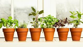 Desatero zimního pěstování bylin akoření vbytě