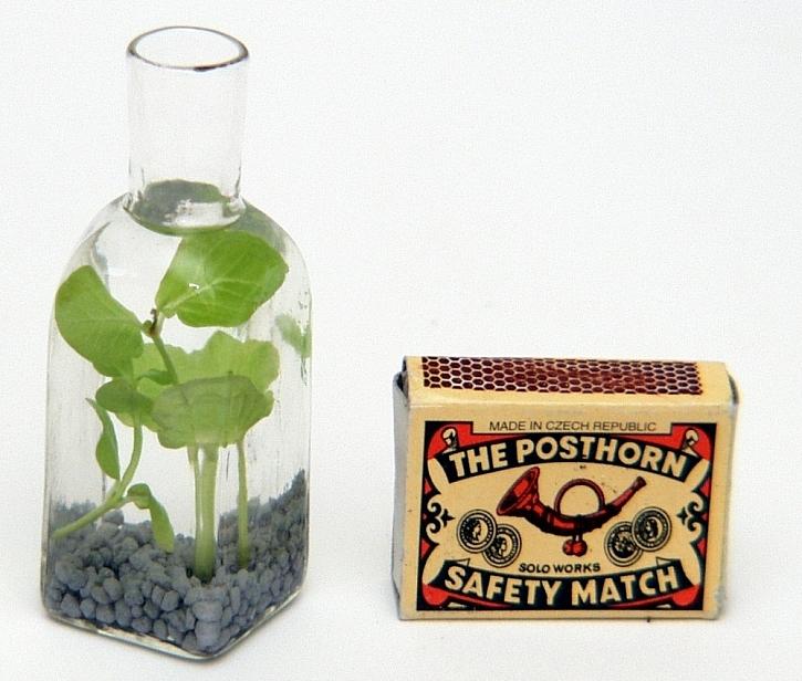 Rostou z vody aneb Vodní zahrádka v láhvi