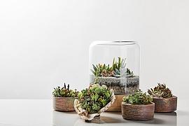 Poradíme vám jak správně přesazovat sukulenty a kaktusy