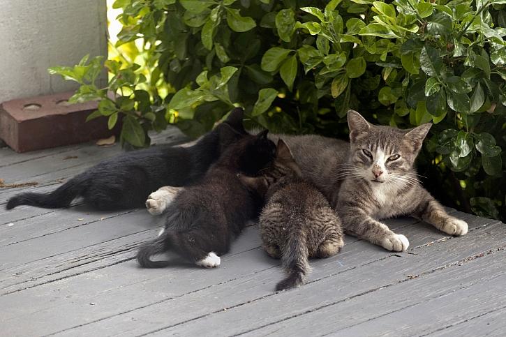 Kočka s koťaty
