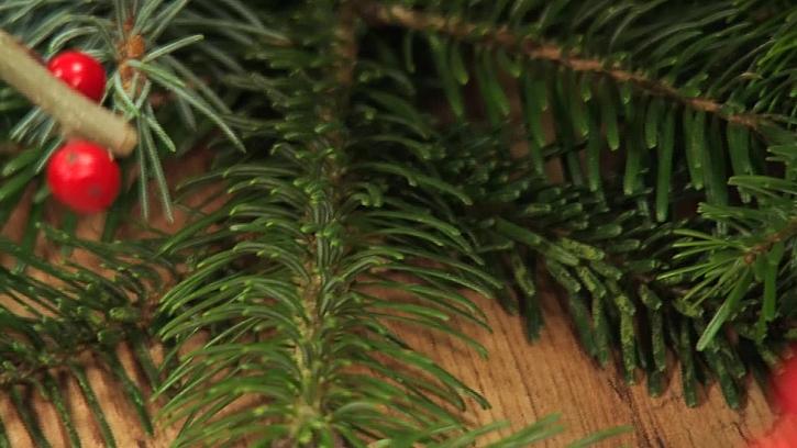 Větvička ze živého stromku
