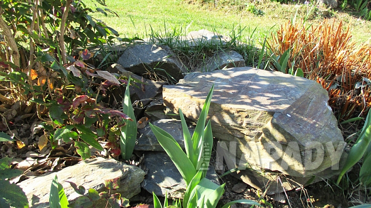 Jak oživit zahradu a udělat radost zpívajícím návštěvníkům: Pítko pro ptáčky 1