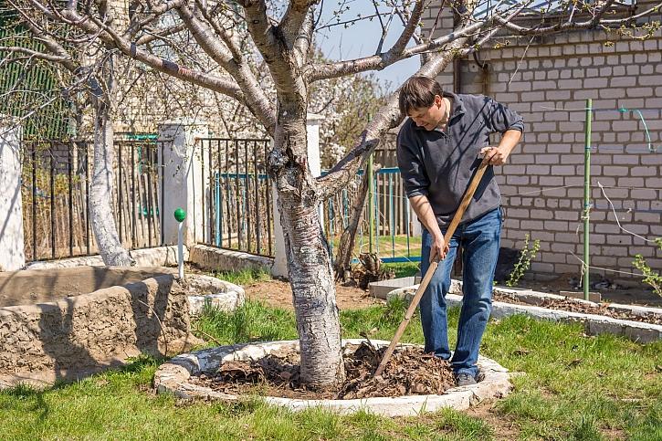 Pečujete o stromy a keře na jaře správně? (Zdroj: Depostiphotos)