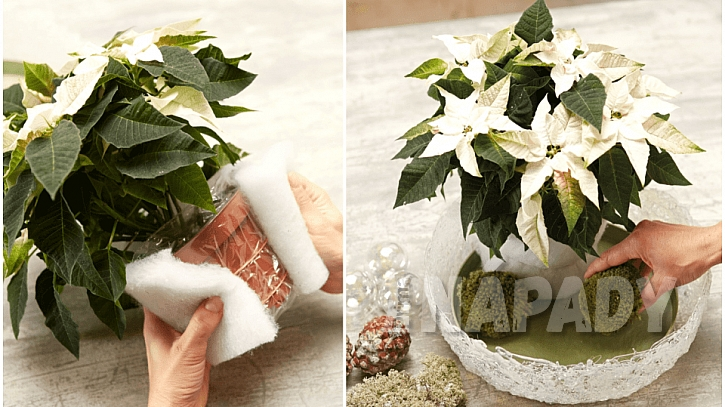 Bílá vánoční hvězda v ledové míse: květináč obalte vatelínem a dekoraci dokončete