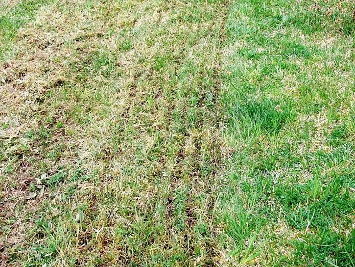 Podzimní péče o trávník aneb Provzdušněte trávník