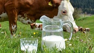 Znáte tajemství domácího jogurtu? Objevte kouzlo mléčného kvašení!