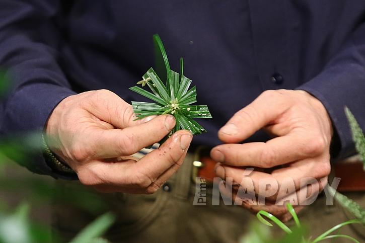 Jak správně množit pokojové rostliny 4