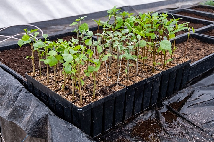 Mladé rostliny v plastových sadbovačích