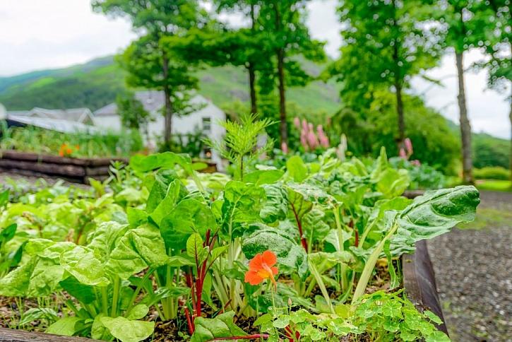 Střídání plodin