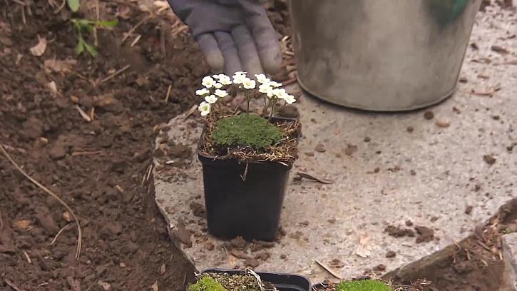 Příprava rostlinek