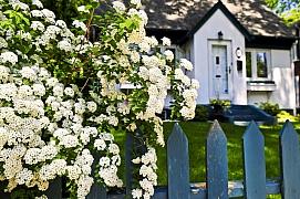 Bíle kvetoucí zahrada je okouzlující