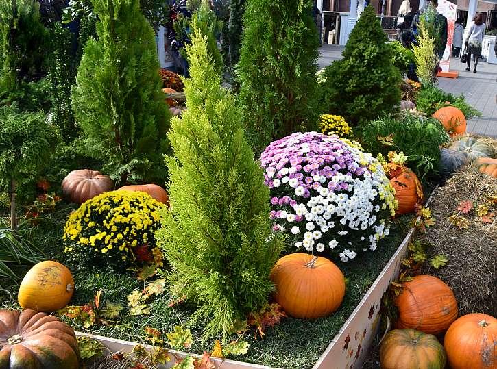 Záhony po úrodě zejí prázdnotou, ozdobte je podzimními květinami a jehličnany