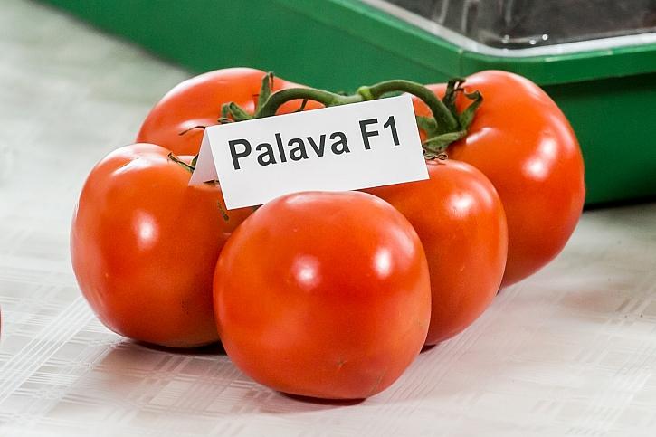 Palava