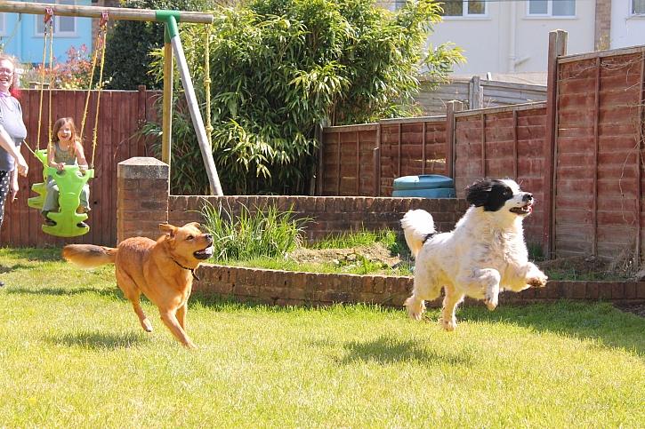 Spokojení psi