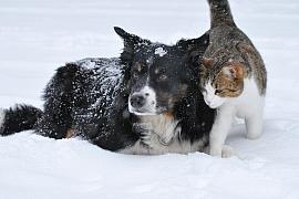 Krmení mazlíčků v zimě: Kočky ipsi mají větší hlad