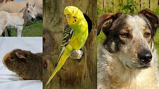 Kam na výlet: Máme rádi zvířata!