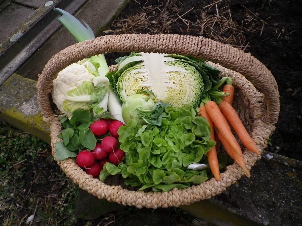 Výsadba a pěstování první jarní zeleniny v minifóliovníku s perforovanou fólií