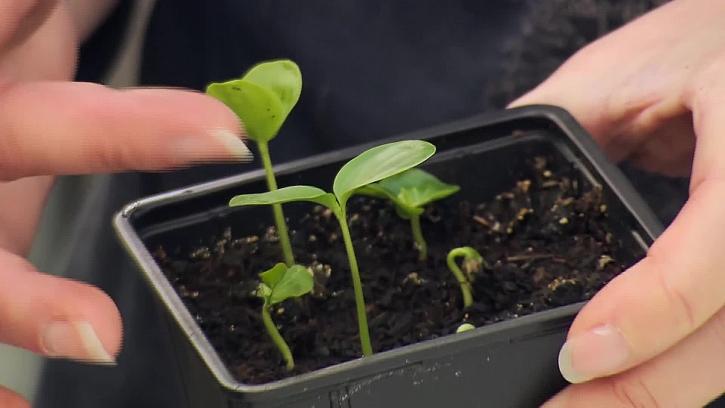Mladé rostlinky