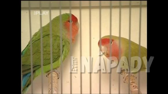 Papoušek pro chovatele začátečníky