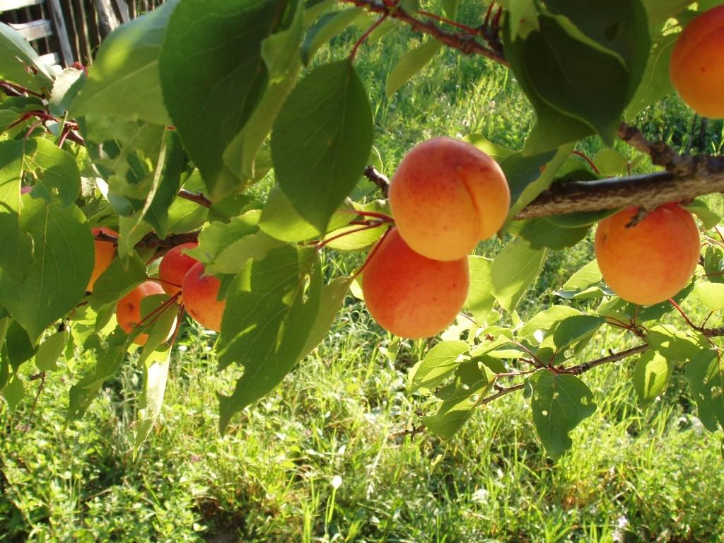 Často kladené otázky na použití přípravků na ochranu rostlin