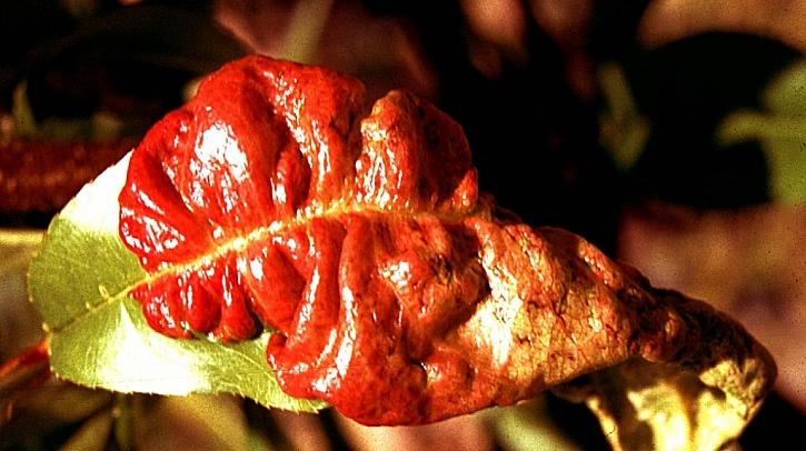 Škůdci, choroby a plísně na našich zahradách