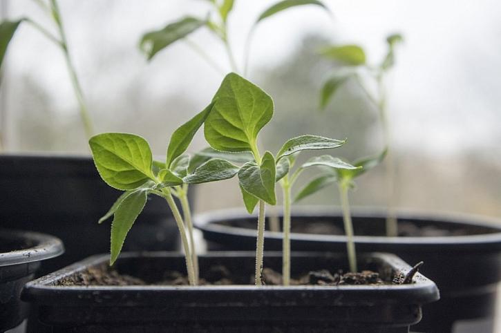 Předpěstujte si úrodu s pomocí sadbovačů