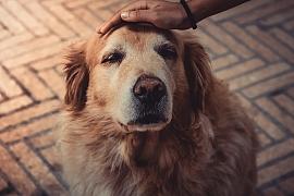Jak se nejlépe postarat o psa seniora