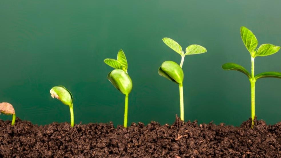 Víte, jak urychlit klíčení semínek? Zkuste starý zahrádkářský trik