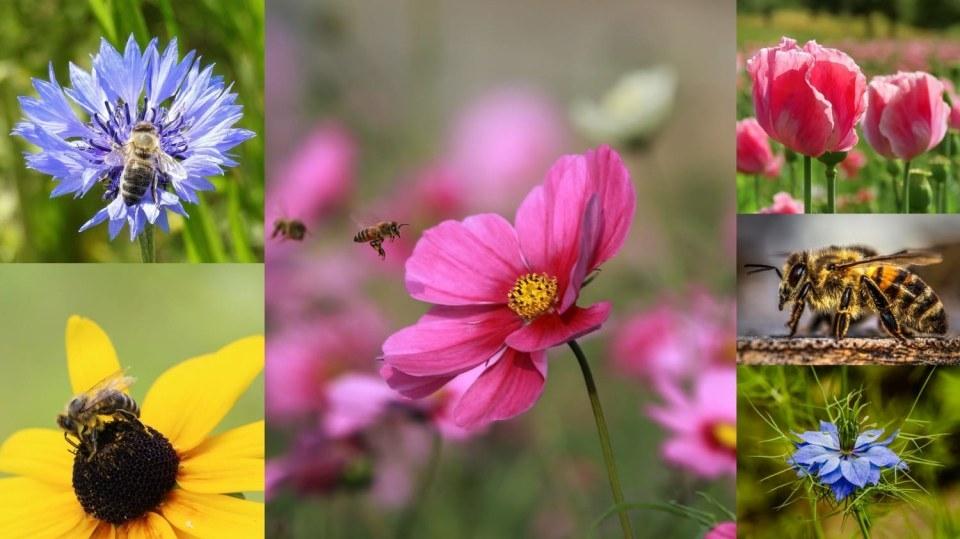 Přilákejte včelky na hostinu: Bez opylovačů se bohaté úrody na zahradě nedočkáte