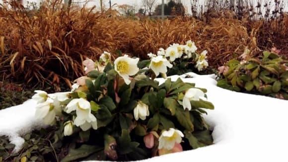 Předjarní květy na zahradě