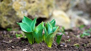 3 tipy, co udělat v březnu na probouzející se zahradě