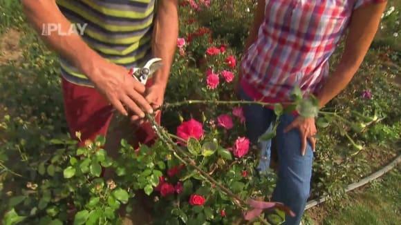 Které rostliny můžete pěstovat za oknem