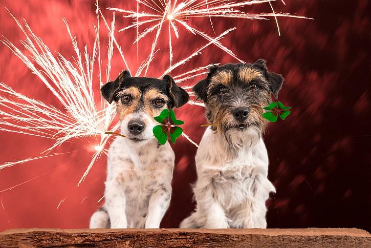 Víte, jak postupovat, aby se zvířata nebála silvestrovských oslav? (Zdroj: Depositphotos)
