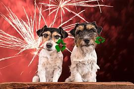 Jak lze postupovat, aby se zvířata nebála silvestrovských oslav