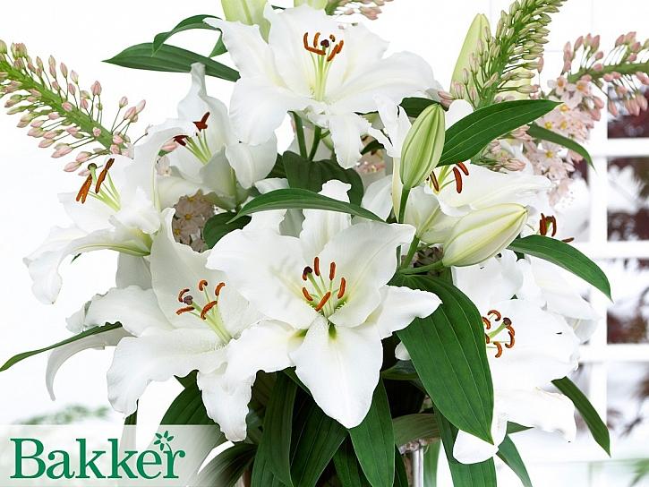 Překrásné lilie do svatebních kytic