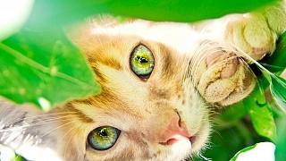 Pokojové rostliny nebezpečné pro kočky: Co dělat, když dojde kotravě?
